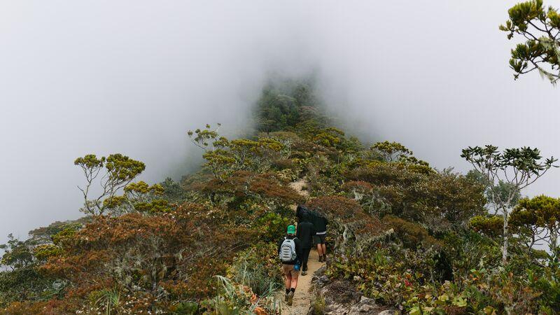 Hikers walking along a misty trail in Borneo