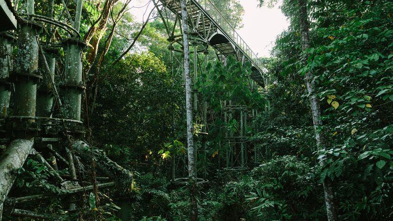A lush rainforest in Borneo