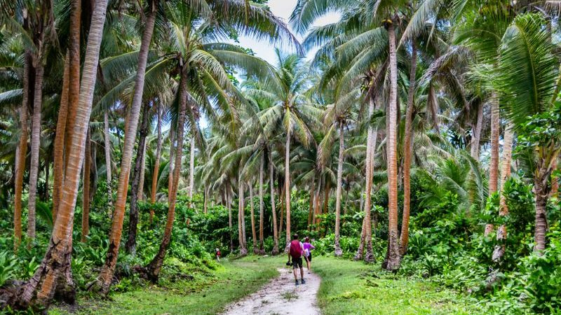 Two hikers walk along a palm-fringed path