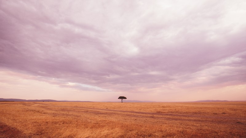 A lone tree in the heart of the Masai Mara