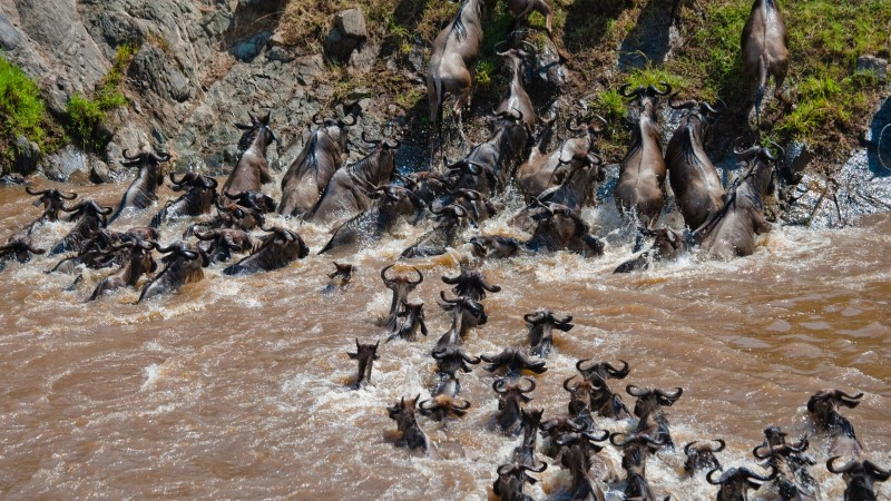 The Great Migration, the Mara River