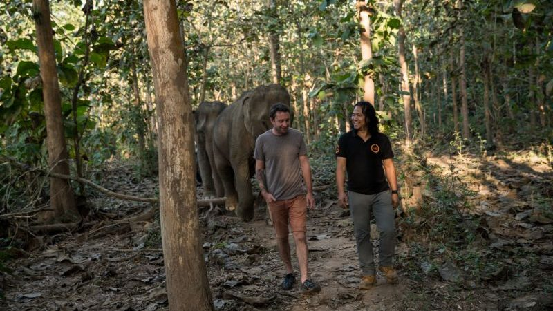 Two people walking through the forest with an elephant
