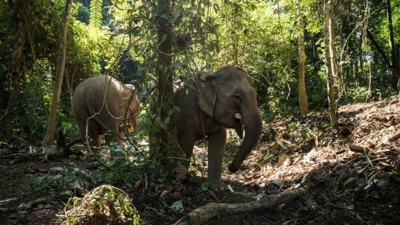Two elephants in the jungle