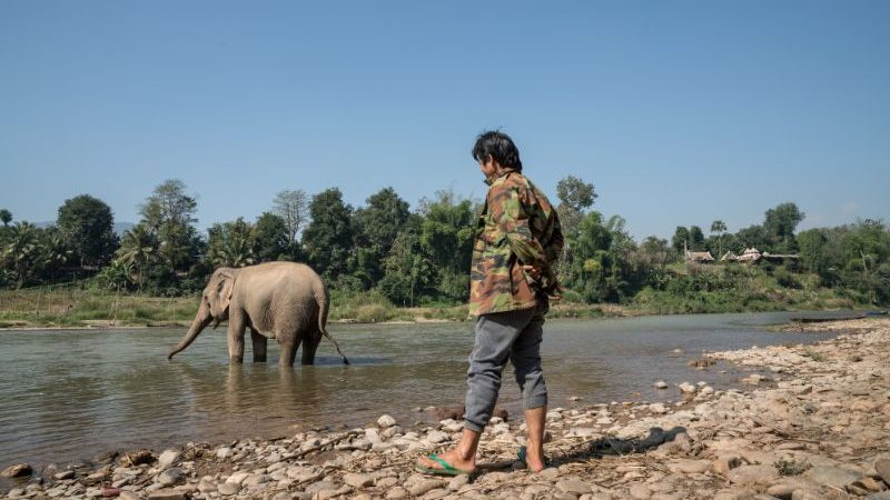 A man watches an elephant in the river