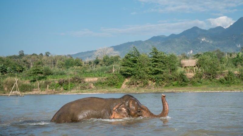 An elephant bathing in a river