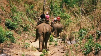 """""""I rode an elephant"""": A confession from Intrepid's CEO"""