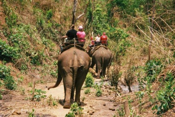 People riding elephants in Thailand