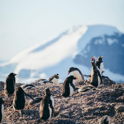 A group of penguins in Antarctica