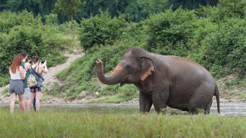 An elephant playing in the river