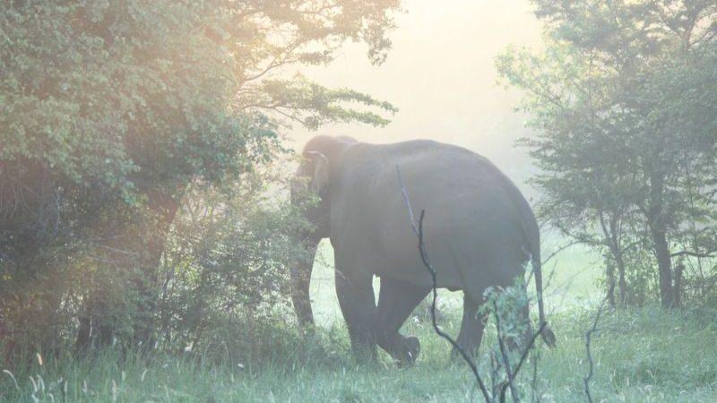 8 Beautiful Places To Visit In Sri Lanka | Intrepid Travel Blog