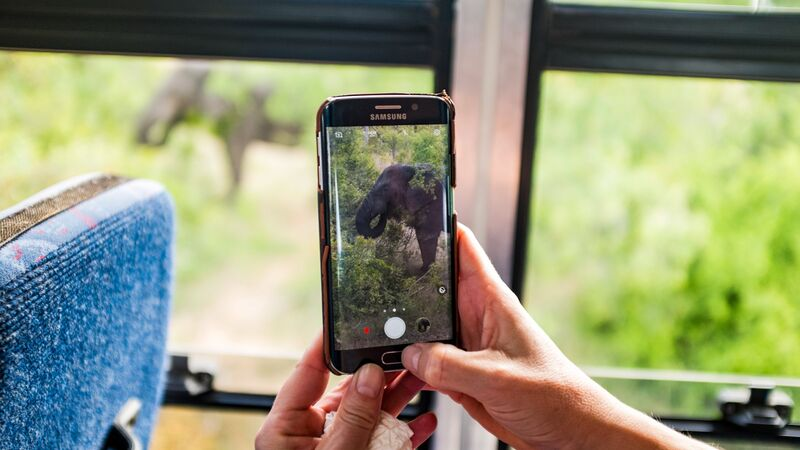 Someone holding a mobile phone taking a photo of an elephant.