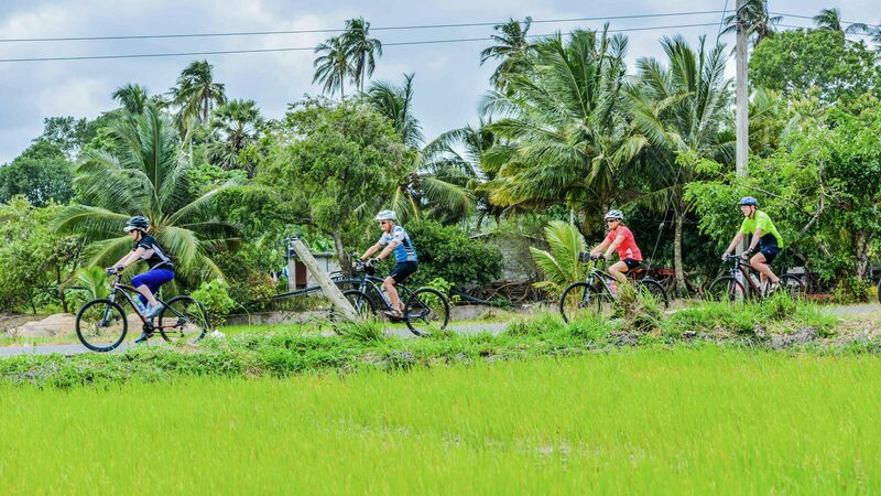 Cyclists riding past a green rice paddy in Sri Lanka