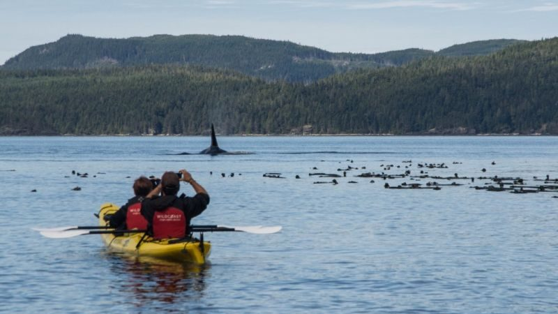 Two people in a kayak taking photos of a whale breaching in a lake