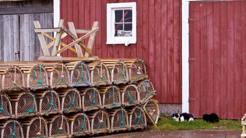 A stack of lobster traps outside a fishing shack, and two cats.