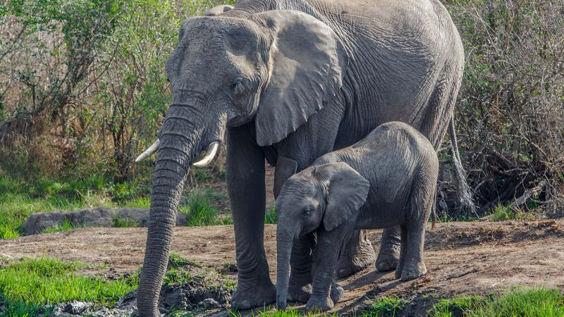 elephants in Swaziland