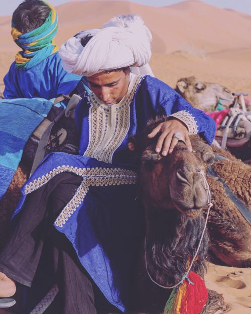 A Berber man getting a camel ready to walk across the desert.