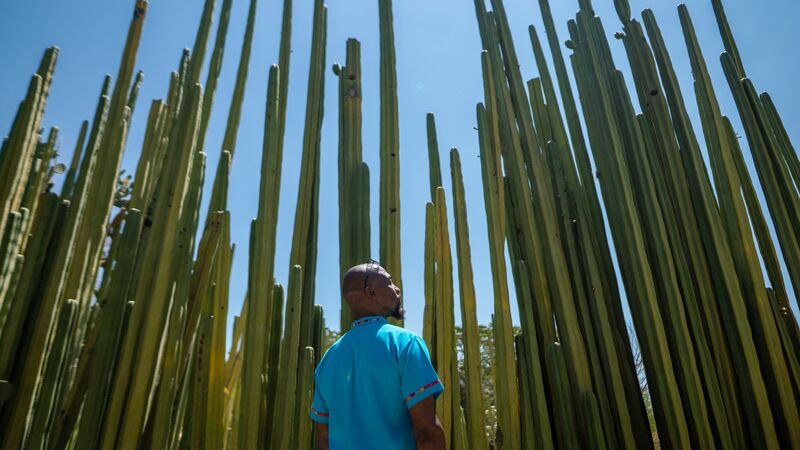A man in a blue shirt in a cactus garden