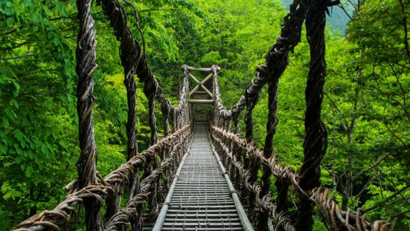 A bridge made of vines in Iya Valley