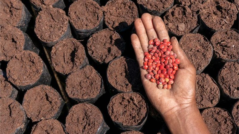A hand holding lots of red seeds