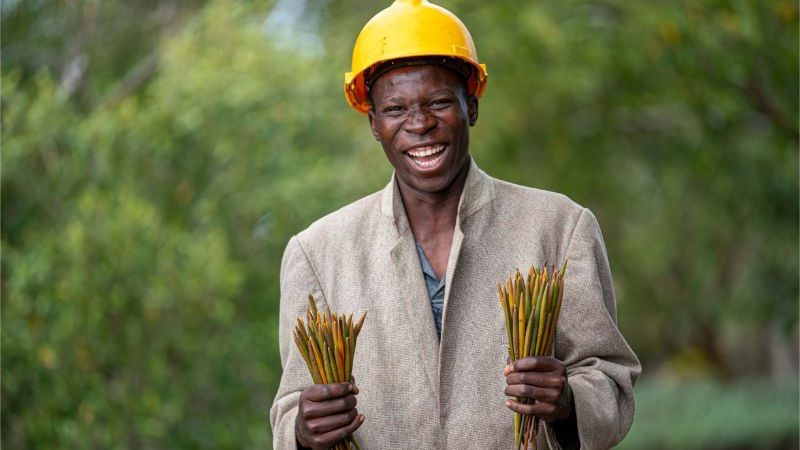 A man in a yellow helmet holding trees roots