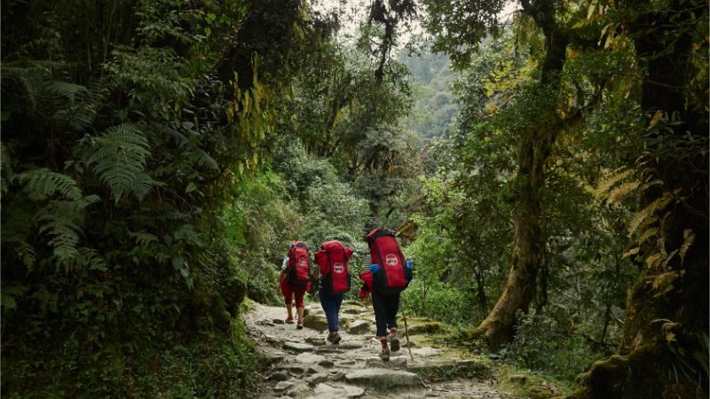 Three porters walking through a forest