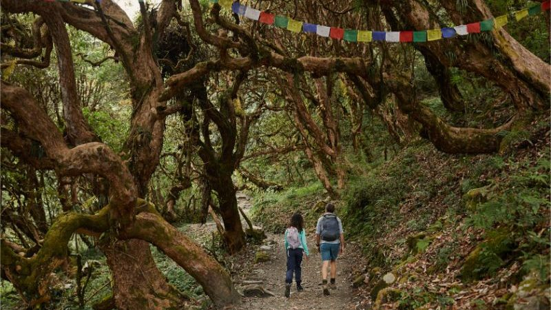 Two hikers walking through a forest beneath prayer flags