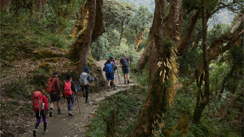 Hikers walking through a forest in Nepal