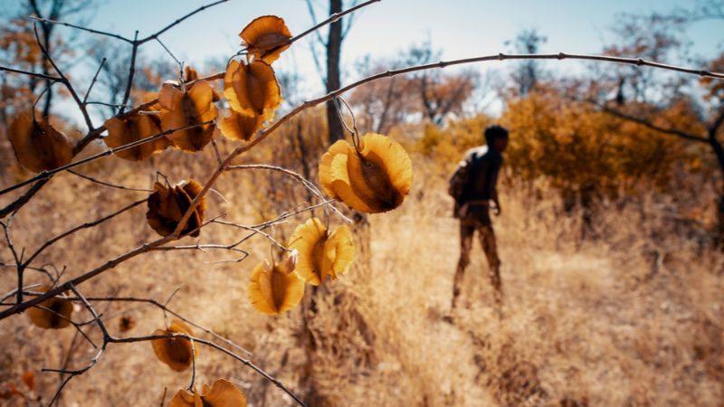 A man walks through the bush in Namibia