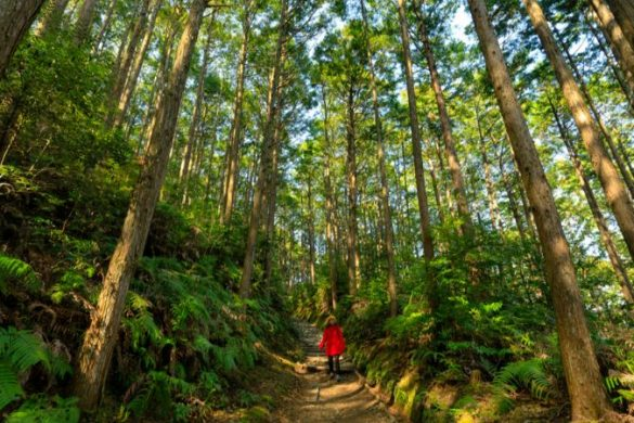 A trekker on the Kumano Kodo trail, Japan