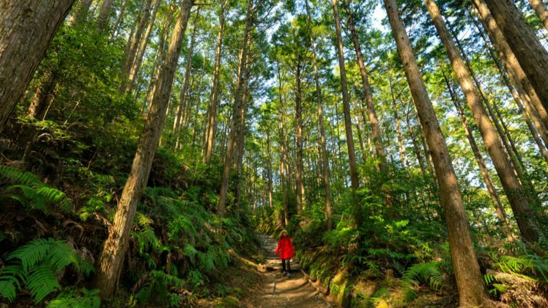 A trekker on the Kumano Kodo trail, Japan