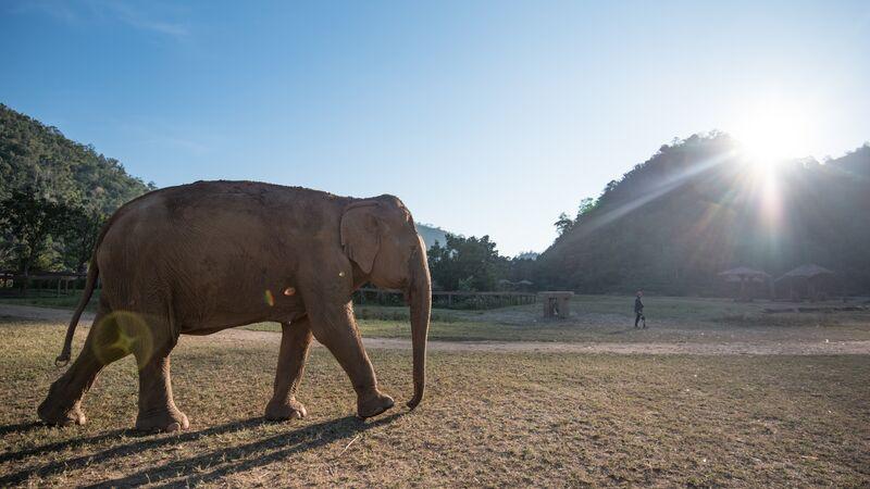 An elephant in Thailand.