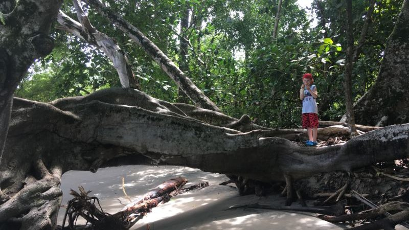 A boy standing on a log on the beach