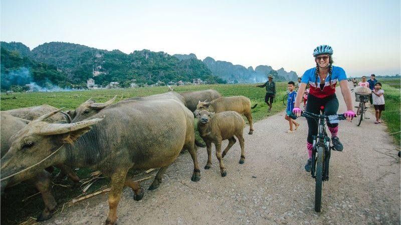 A cyclist rides alongside a herd of water buffalo in Vietnam