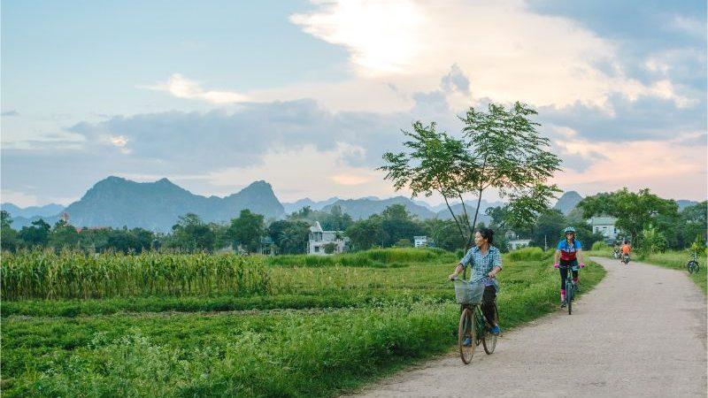 Cyclists riding past rice paddies in Mai Chau, Vietnam