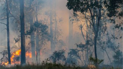How you can help those affected by the Australian bushfires