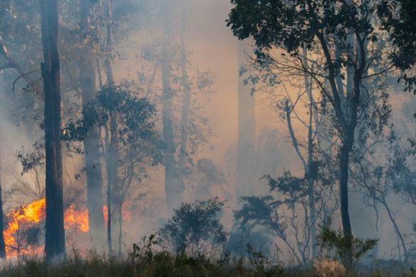 Australian bush fire