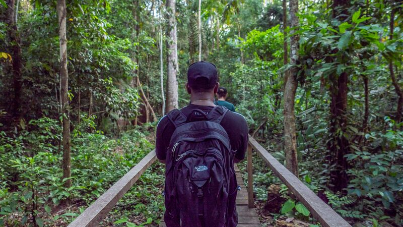 A traveller walking through a rainforest in Peru.