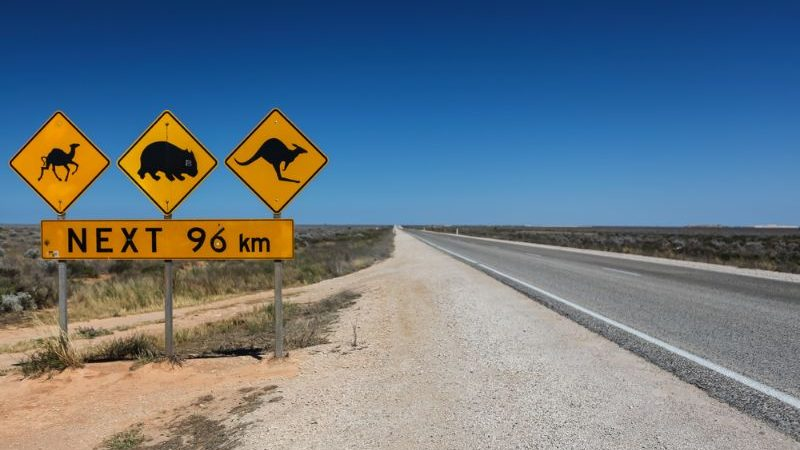 Wildlife crossing sign on the Nullarbor Plain