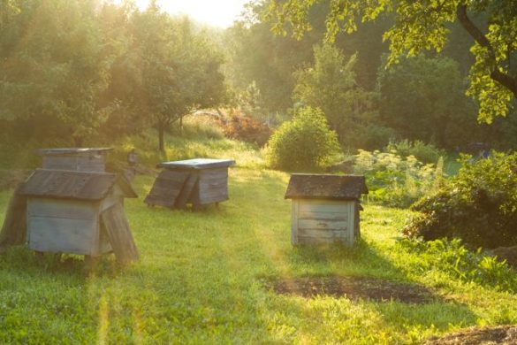 Beehives in a grassy field at sunset