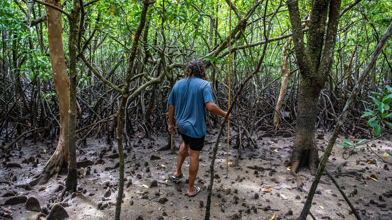 Linc in the Mangroves