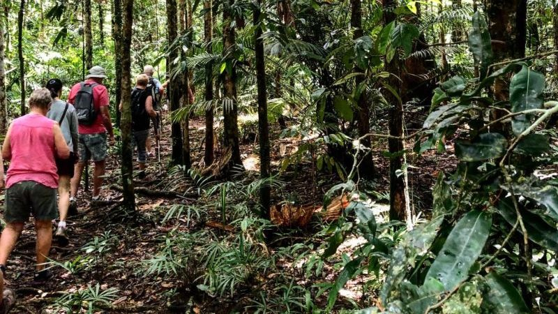Travellers in the Daintree