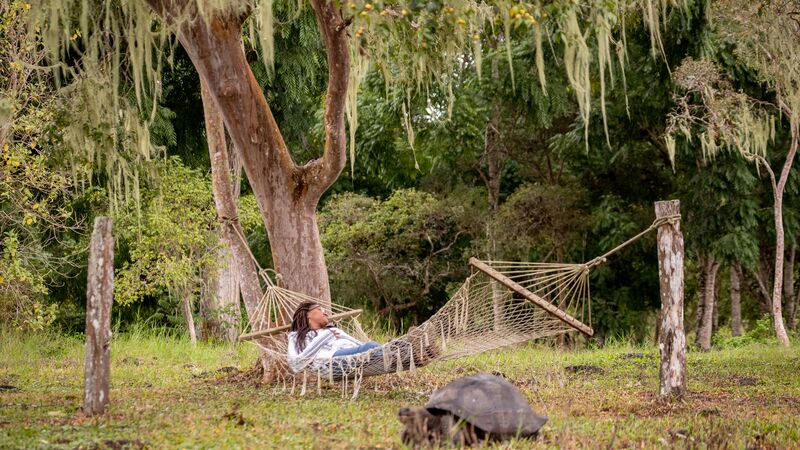 Traveller asleep in a hammock next to a Giant tortoise.
