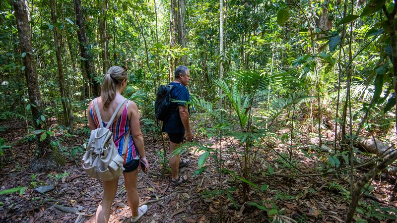 Traveller in the Daintree