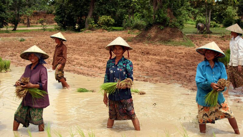 Locals working in Cambodia