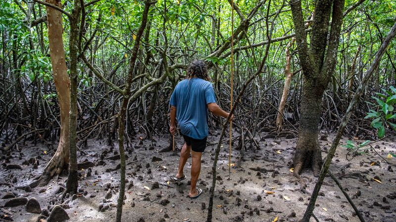 Spear hunting at Cape Tribulation