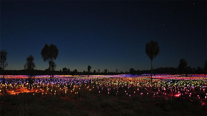 Field of Light at Uluru