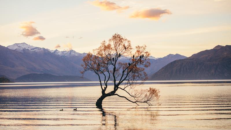 That Wanaka Tree in Lake Wanaka