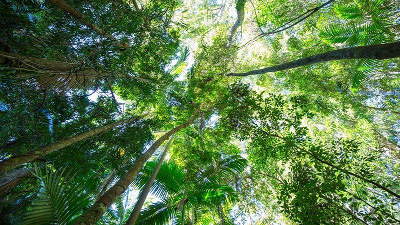 Native bushland in Queenland, Australia