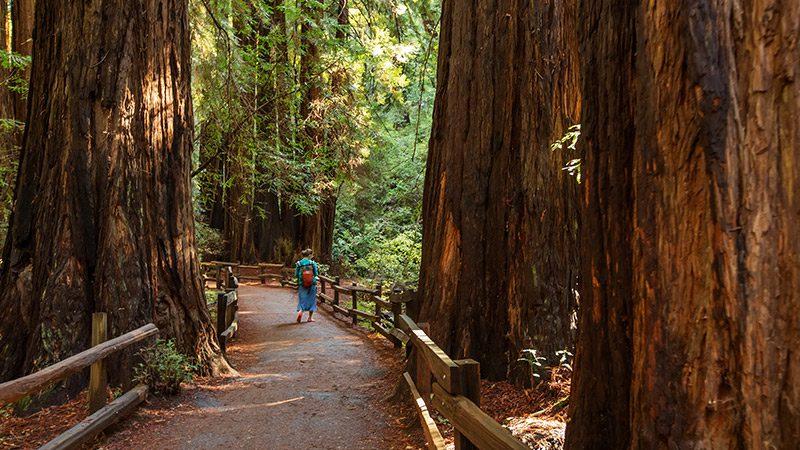 A woman walking through the Muir Woods in San Francisco.