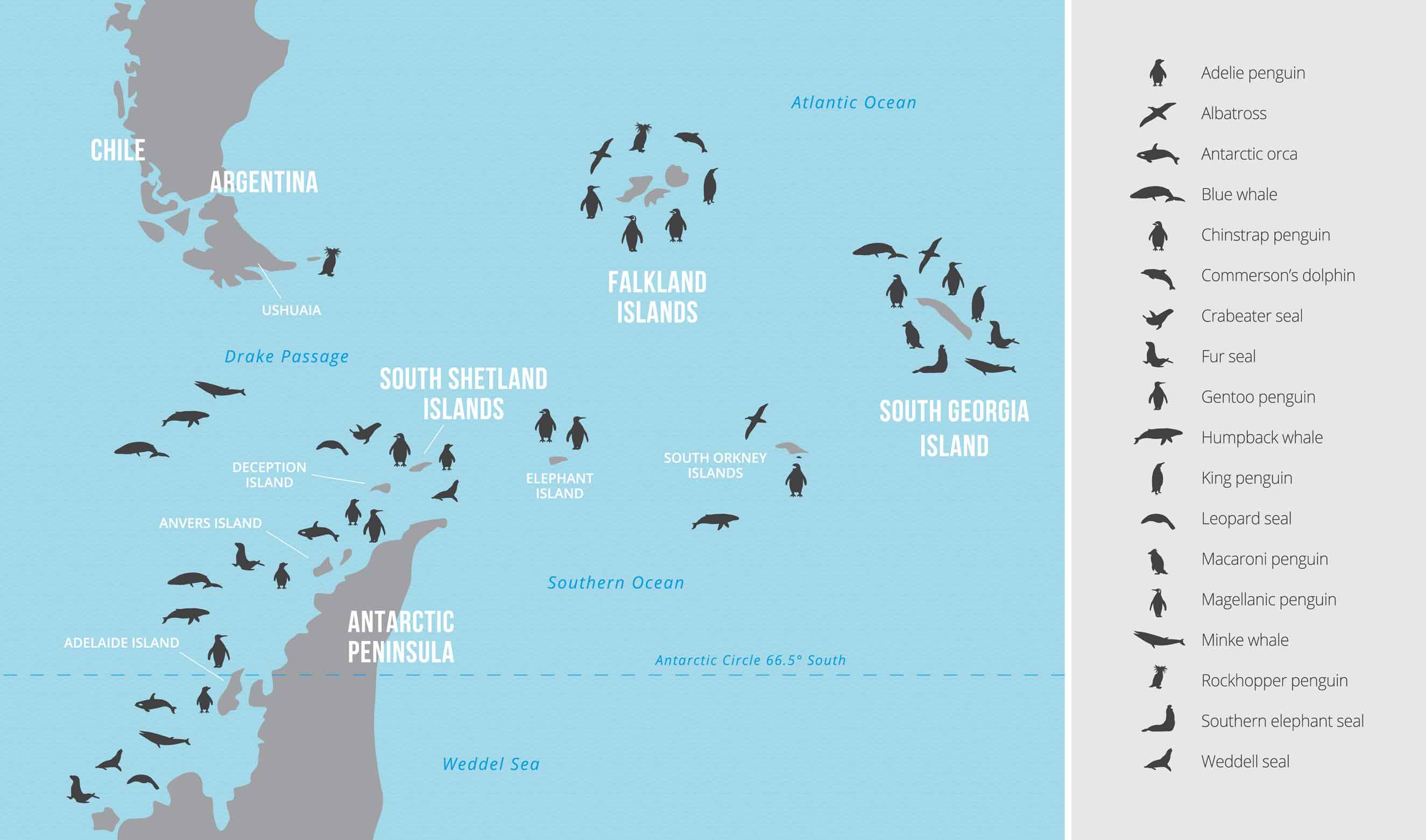 Map of whales penguins and seals found in the Antarctic